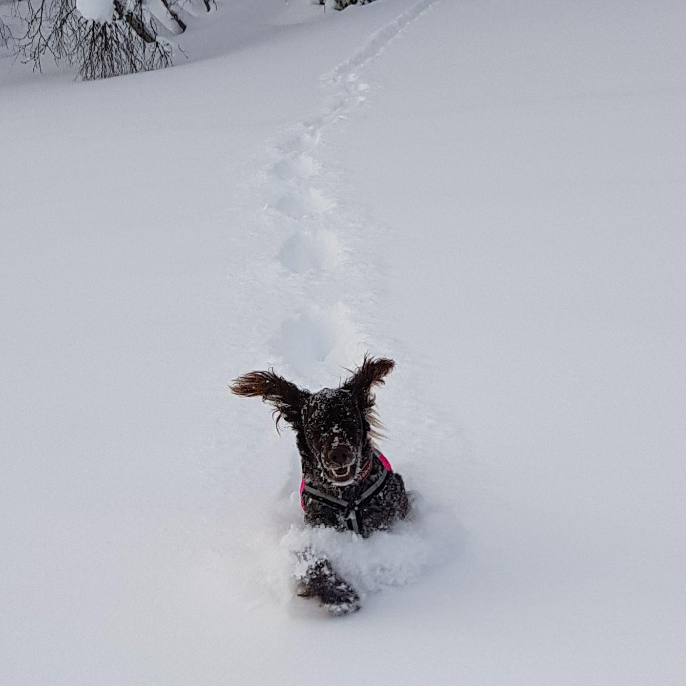 Greta i snön