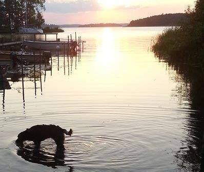Watson i vattnet