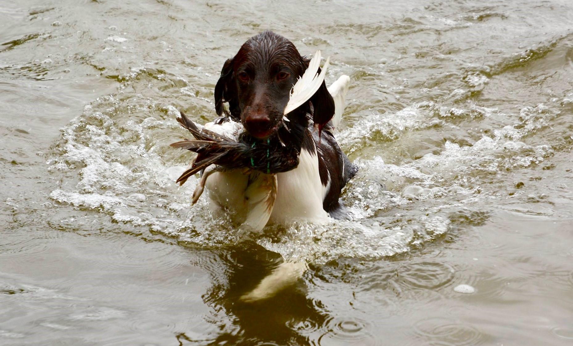 Cindy i vattnet 2