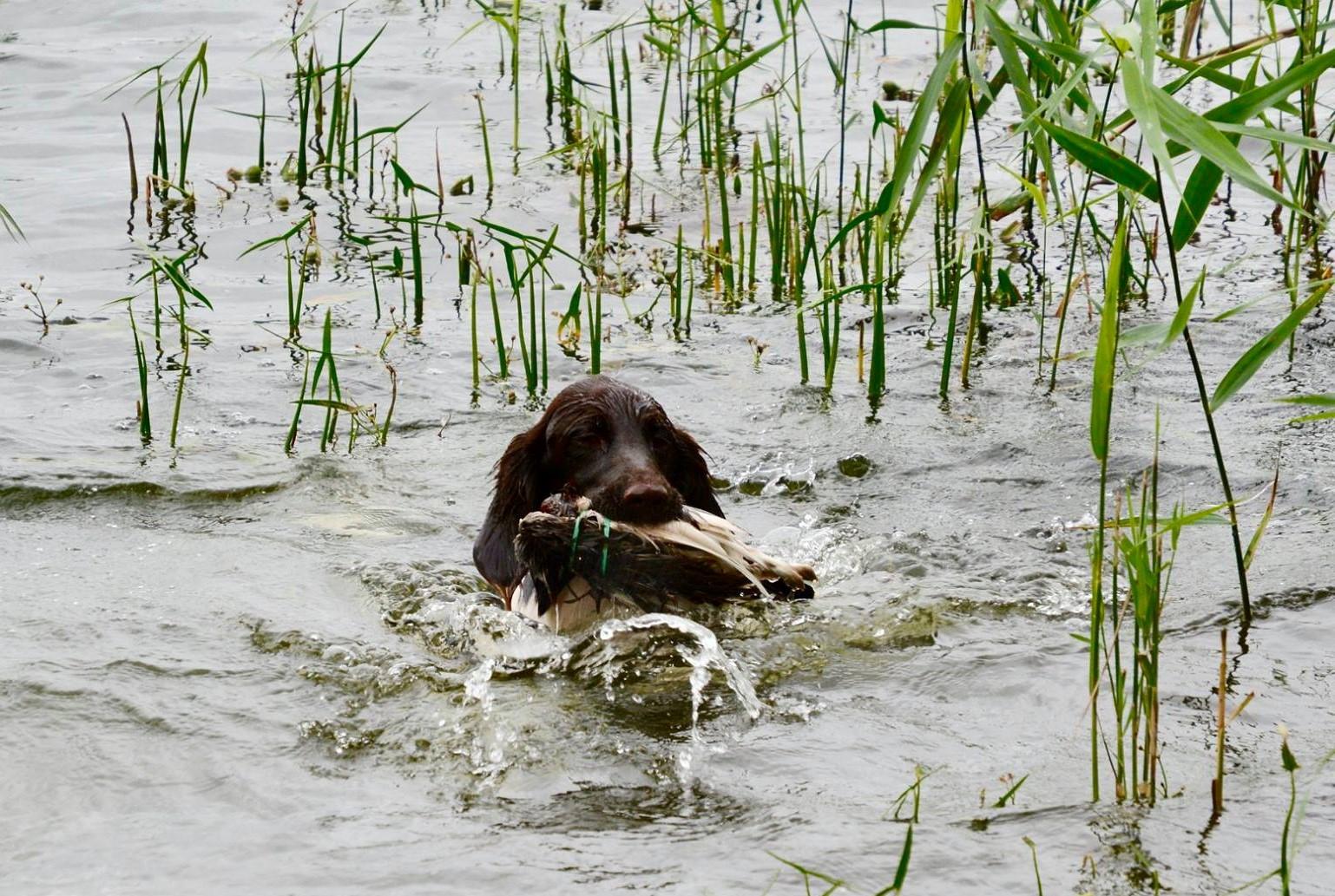 Cindy i vattnet